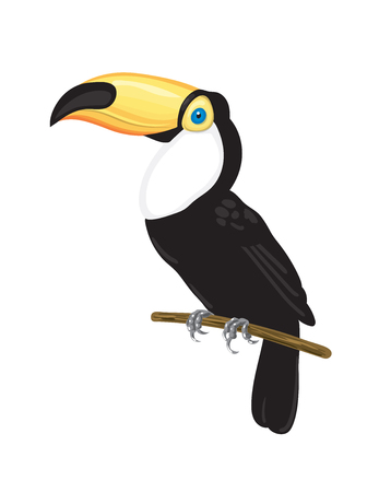 Toucan on branch. Tropical bird vector illustration on white background.
