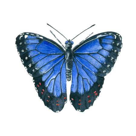 Watercolor and ink painting of a blue morpho butterfly isolated on white background.