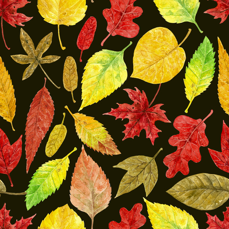 Seamless watercolor pattern made of various colorful autumn leaves. Stock Photo