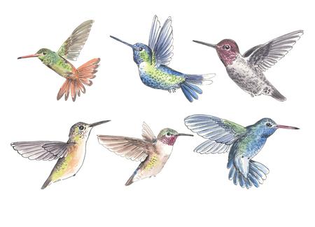 Set van 6 kolibries geschilderd met aquarellen en inkt op witte achtergrond. Elementen voor ontwerp.