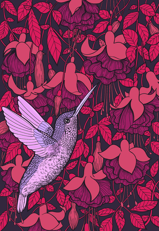 Hummingbird and fuchsia flowers hand drawn illustration. 向量圖像