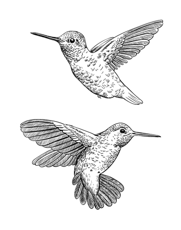 Set of 2 hand drawn hummingbirds on white background.Elements for design.