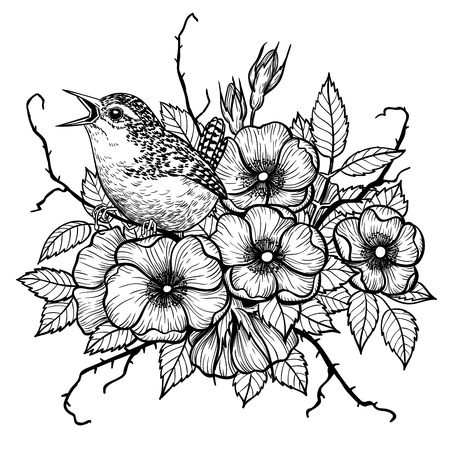 Wren on bouquet of dog rose, hand drawn illustration.