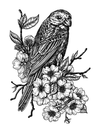 Vector drawing of a finch on  cherry branch.