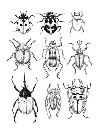Ilustración de vector de varios escarabajos, elementos de diseño. Ilustración de vector