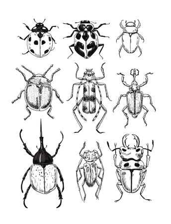 Vector illustration on various beetles, elements for design.