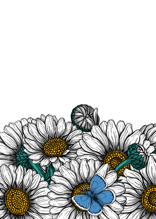 Daisy flowers and common blue butterfly  forming border on white background with space for text.