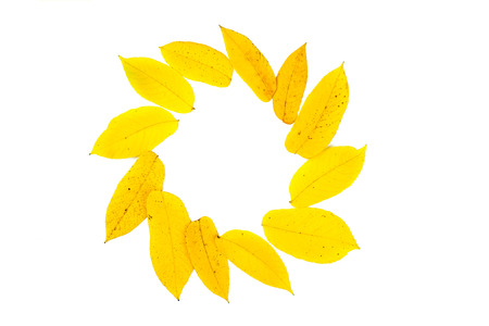 yellow leaves in circle and copy space
