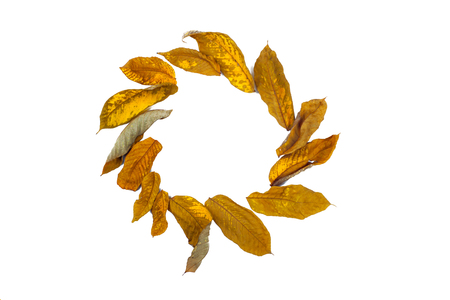 autumn dry leaves laid on a white background around