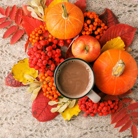 Hot autumn drink, coffee or cocoa, with yellow leaves and decorative pumpkins and apples on knitted woolen plaid. Fall autumn composition. Thanksgiving postcard
