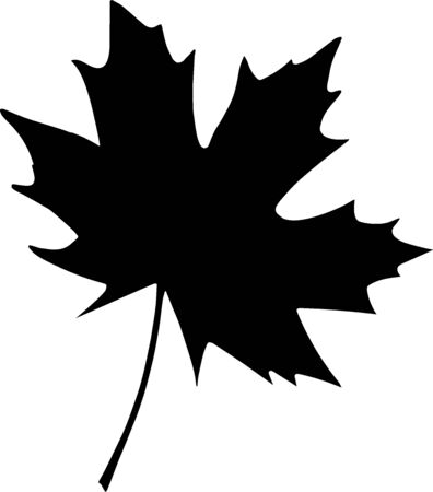 Cute hand drawn leaf of maple isolated on white background. Sketch elements set for graphic and web design.