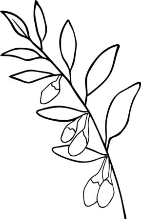 Cute hand drawn goji twig in doodle style isolated on white background. Sketch elements set for graphic and web design.