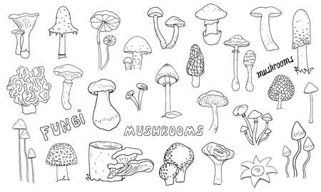 Mushrooms hand drawn linear icons set  イラスト・ベクター素材