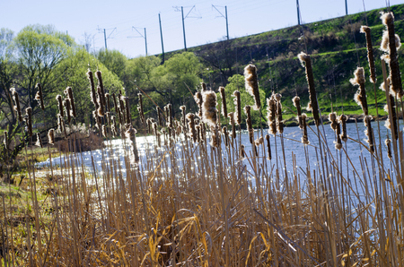 Reeds over the water on a springy sunny day Stock Photo