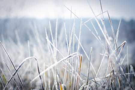 the first frost, the beautiful morning frost on the grass Stock Photo