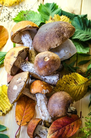 Various edible mushrooms collected in the fall in the woods Stock Photo