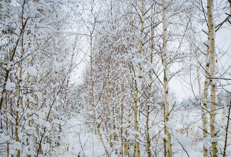beautiful, winter landscape, trees covered with snow Banque d'images
