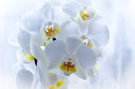 orchidée sur le rebord de la fenêtre, gros plan de plante d'intérieur Banque d'images