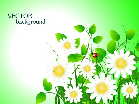 summer meadow background with place for your text Stock Vector - 9687111