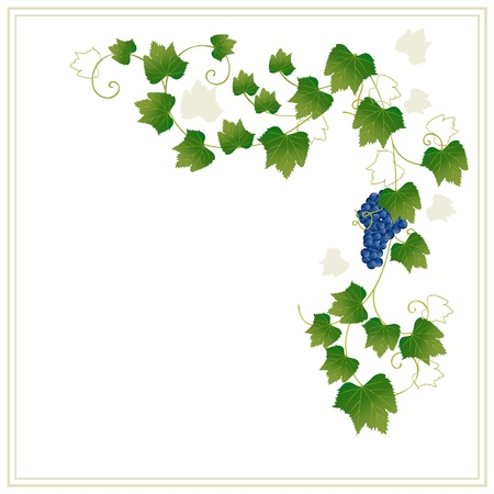 floral frame with grapes Stock Vector - 9892819
