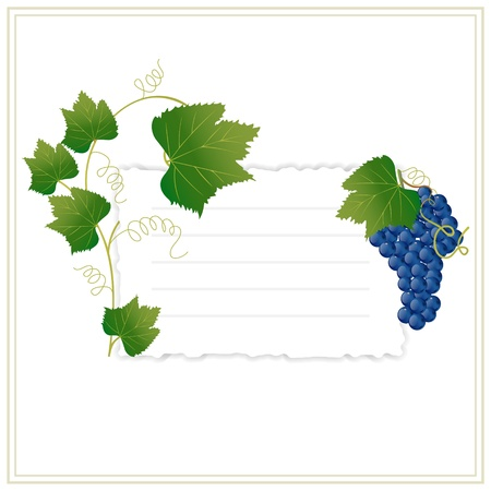 frame with grapes and green leaves Stock Vector - 9892827