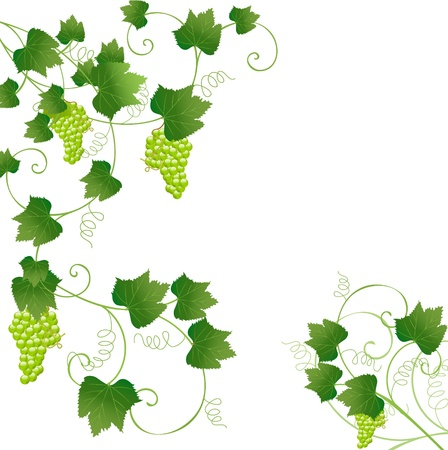 floral frame with grapes Vector