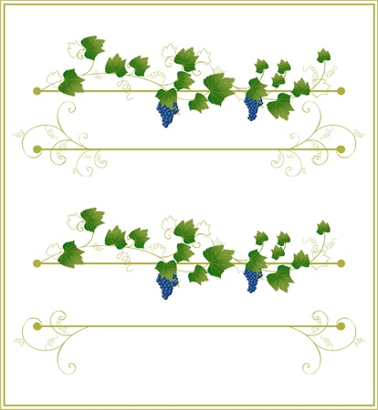 vine leaf: floral frame with grapes