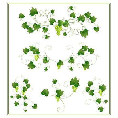 grape design elements Stock Vector - 10035964