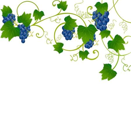 floral frame Stock Vector - 10129136