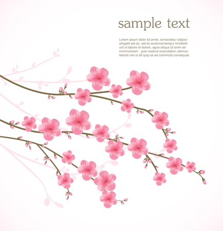 cherry blossom tree: Cherry blossom card Illustration