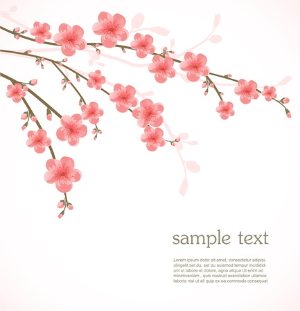 japan culture: Cherry blossom card Illustration