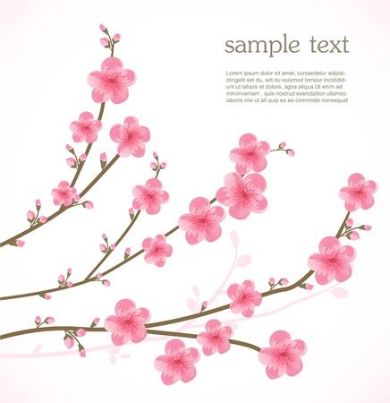 Kirschblüten-Karte Vektorgrafik
