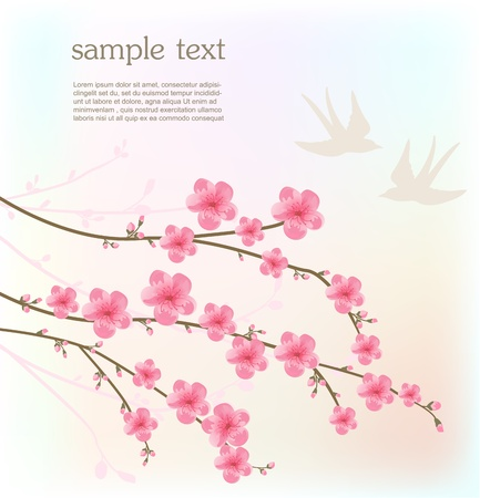 cerisier fleur: Fleur de cerisier carte Illustration