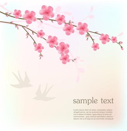"""cherry blossom"": Cherry blossom card Illustration"