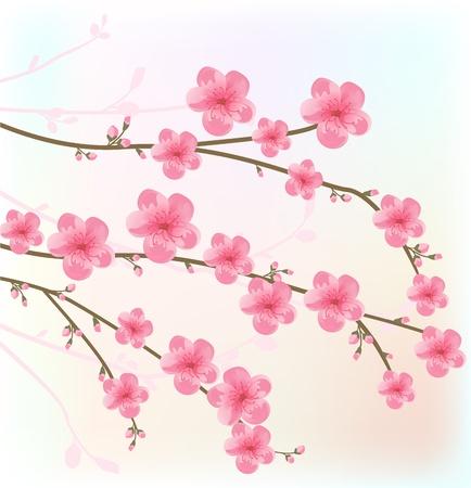 japanese garden: Cherry blossom card Illustration