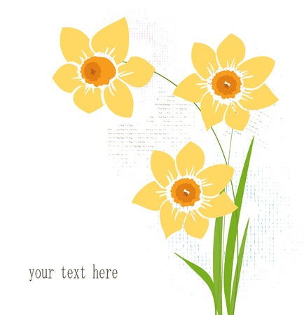 Greeting card with narcissus Vector