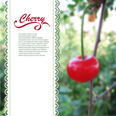 fruit stalk: Cherries blurred background with space for text