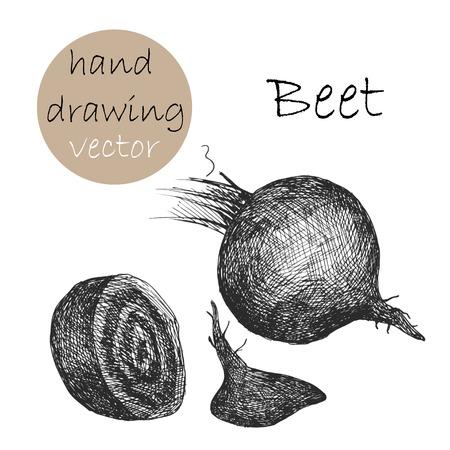 beet: Hand Drawn beet. Monochrome sketch. Illustration