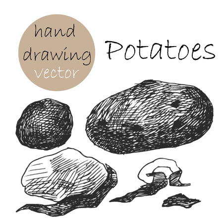 rinds: Hand Drawn potatoes. Monochrome sketch.