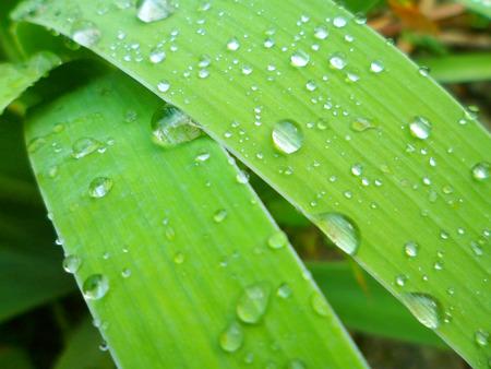 raindrops on green grass leaves close-up macro photo