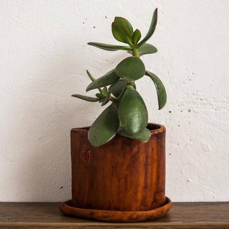 clay pot plant Banco de Imagens