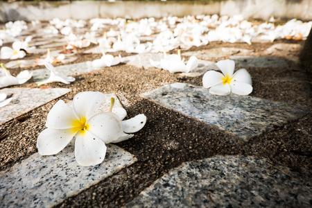 waxy: flower