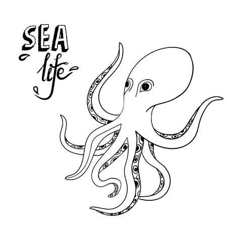 Hand drawn octopus. Sketch wild sea life. Creature in the ocean isolated