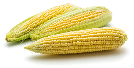 Group of three fresh corn ears isolated on white background