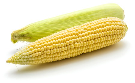 Two fresh corn isolated on white background