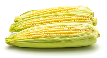 Fresh sweet corn, three ears, isolated on white background  Stock Photo