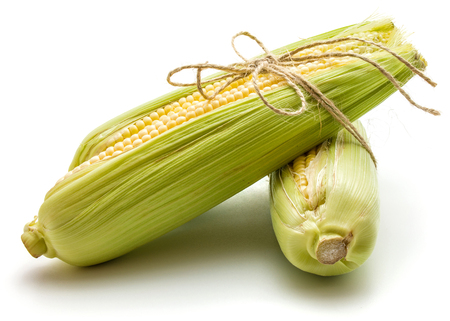Two sweet corn ears tied by burlap rope isolated on white background  Stock Photo