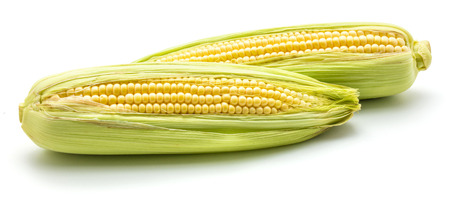 Two ears of fresh sweet corn isolated on white background