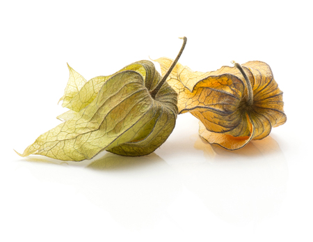 Two physalis isolated on white background  Stock Photo