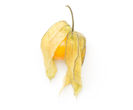 Physalis top view isolated on white background one orange berry